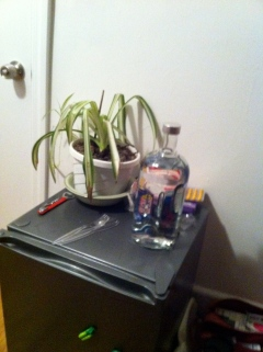 Hostel room mini fridge, vodka and Horts the house plant