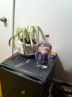 Hostel room mini fridge, vodka and Horts the house plant