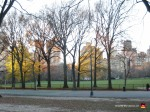04-central-park-winter-trees-grass-new-york-city-view