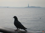 07-statue-of-liberty-pigeon