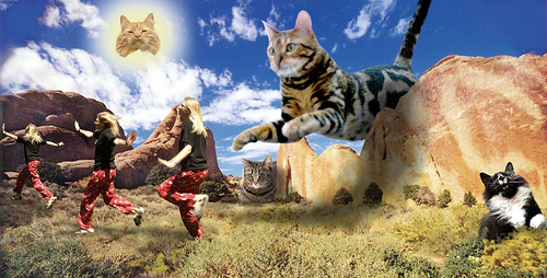 Crazy surreal dream about cats