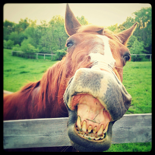 Funny horse with bad teeth