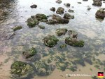 39-seaweed-covered-rocks-at-cannon-beach