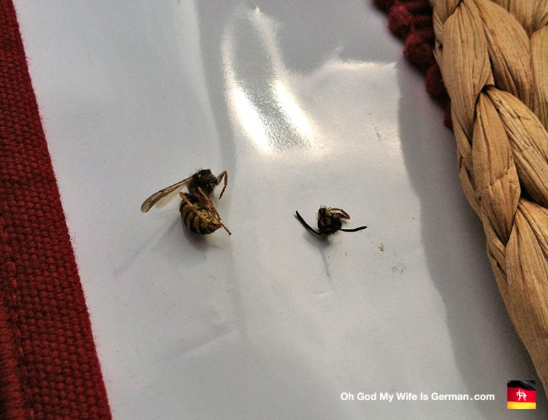 german-wasp-pests-insects-dead
