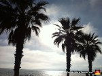 14-mallorca-palm-trees-silhouette-beach