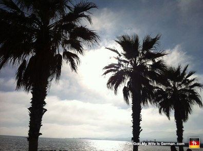 14-mallorca-palm-trees-silhouette-beach