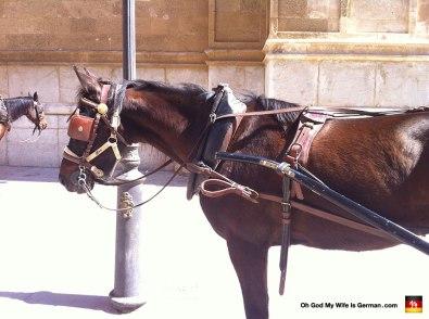 28-horse-tour-palma-catedral-de-mallorca