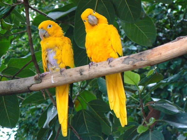 two-birds-with-one-stone-funny-parrots