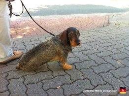 03-Steinhuder-Meer-Sad-Dog-Funny