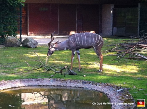 04-hannover-erlebnis-zoo-2014-germany
