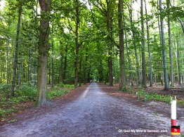06-Steinhuder-Meer-Bike-Path-Forest