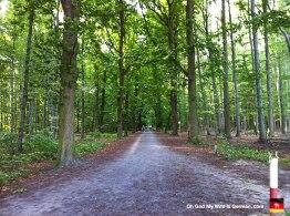 06-Steinhuder-Meer-Bike-Path-Forest