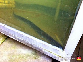 19-Steinhuder-Meer-Eels-Food