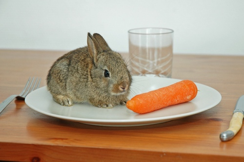 rabbit-eating-carrot-on-dinner-plate-funny-cute