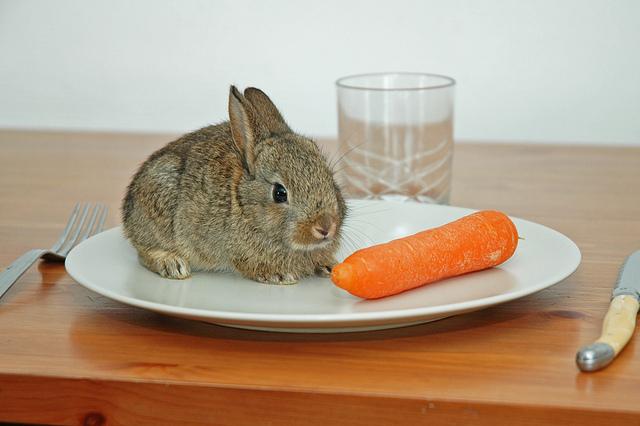 rabbit-eating-carrot-on-dinner-plate-funny-cute
