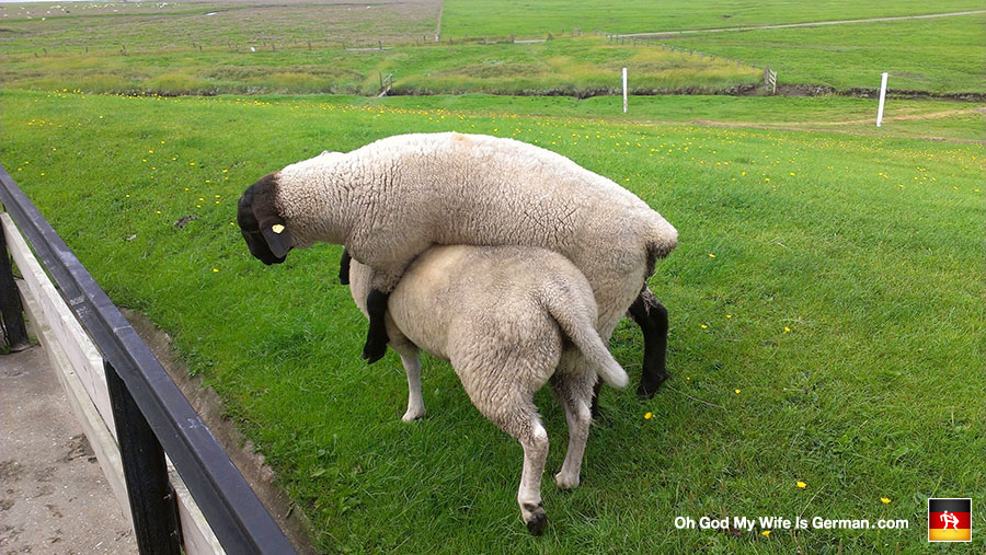 German-American Couple Visits the North Sea, Denmark and a Whole Hell of a Lot of Sheep (1/6)
