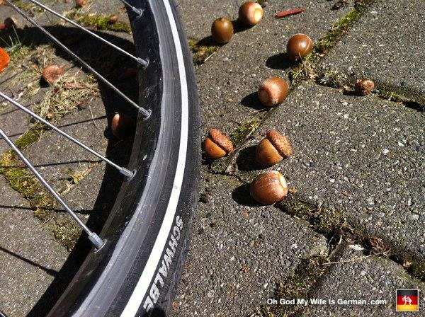 acorns-and-a-bike-tire-in-germany
