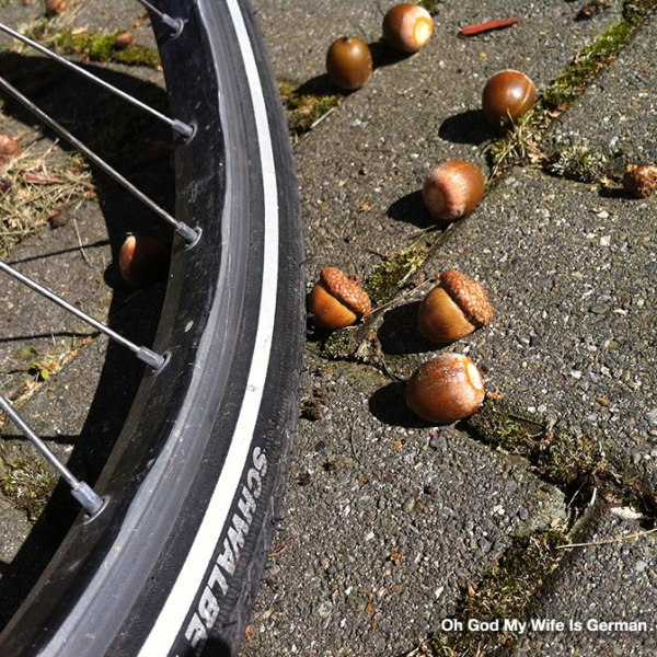 acorns-and-a-bike-tire-in-germany