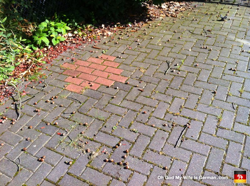 acorns-on-the-ground-in-germany