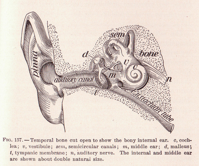 ear-diagram-drawing-offenes-Ohr-german