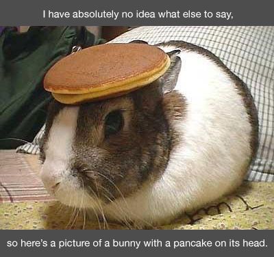 Bunny with a pancake on its head