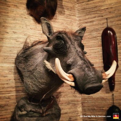 03-taxidermy-hunting-trophy-africa-warthog