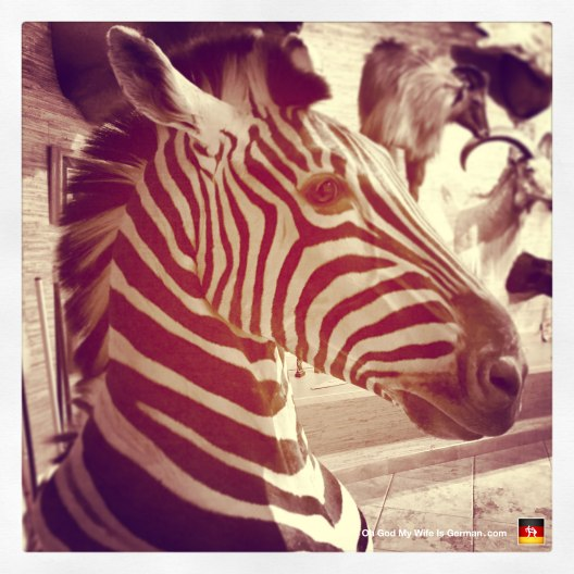 05-taxidermy-hunting-trophy-africa-zebra