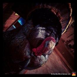 07-taxidermy-hunting-trophy-turkey