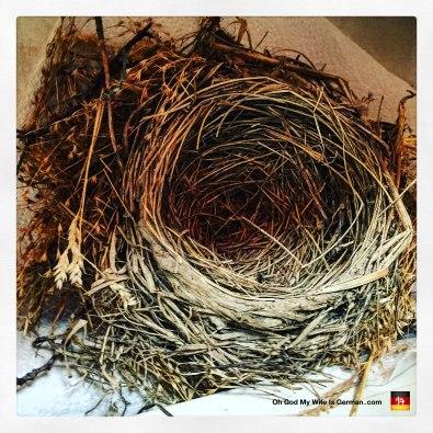 portland-oregon-bird-nest