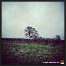 portland-oregon-vinyard