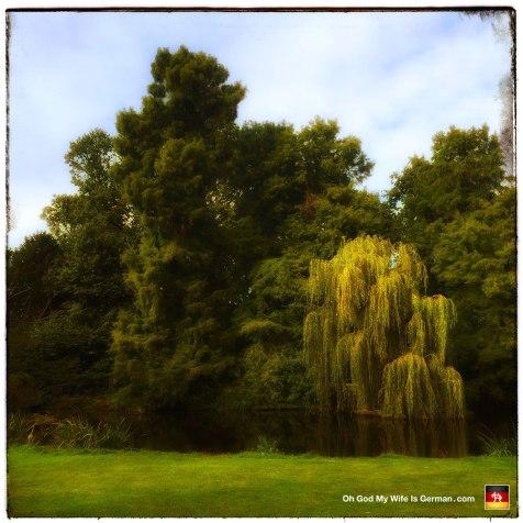 66-vondelpark-amsterdam-trees