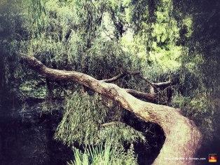 67-vondelpark-amsterdam-bent-tree