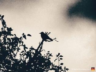 68-bird-park-amsterdam-vondelpark