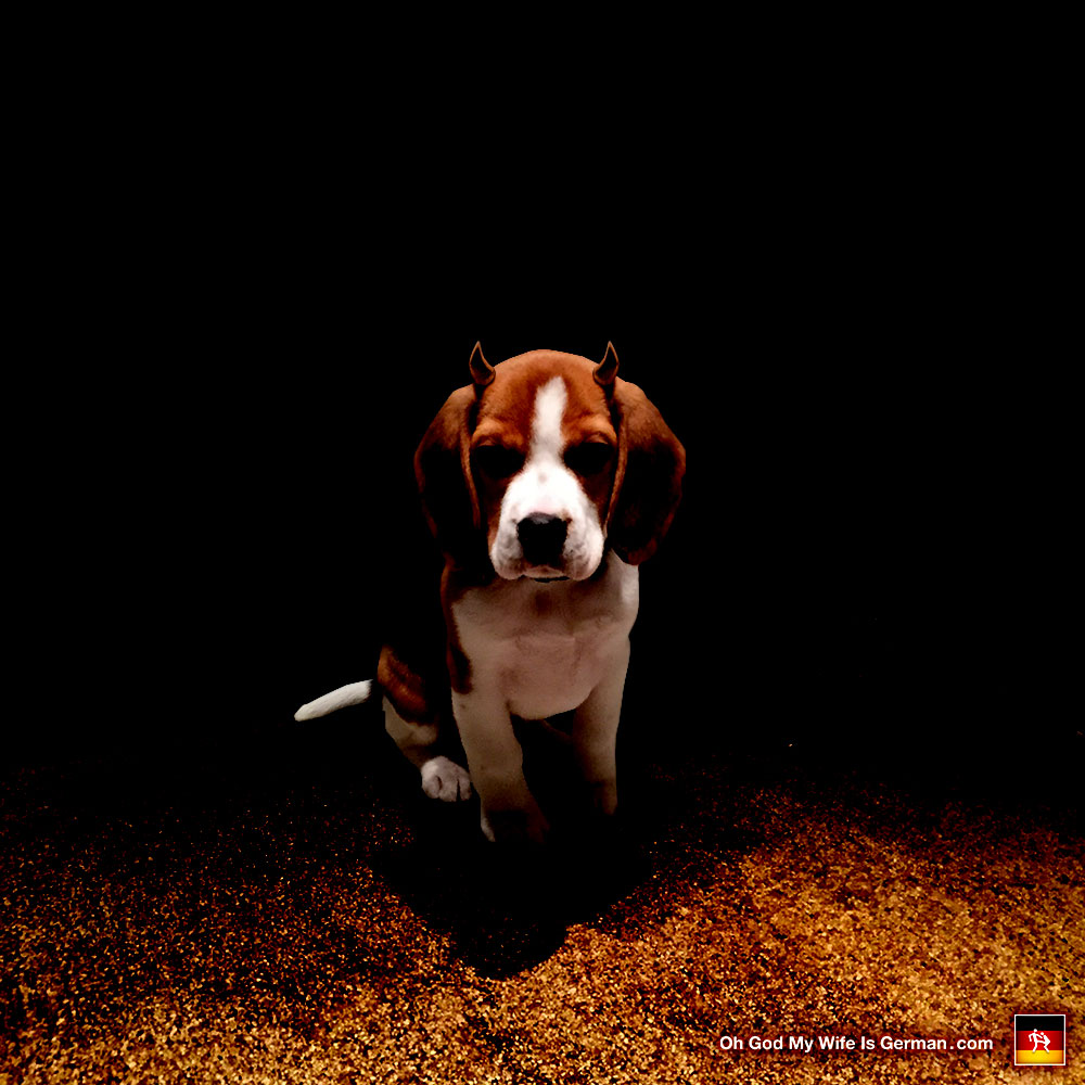 Yeti the Evil Beagle – Oh God, My Wife Is German