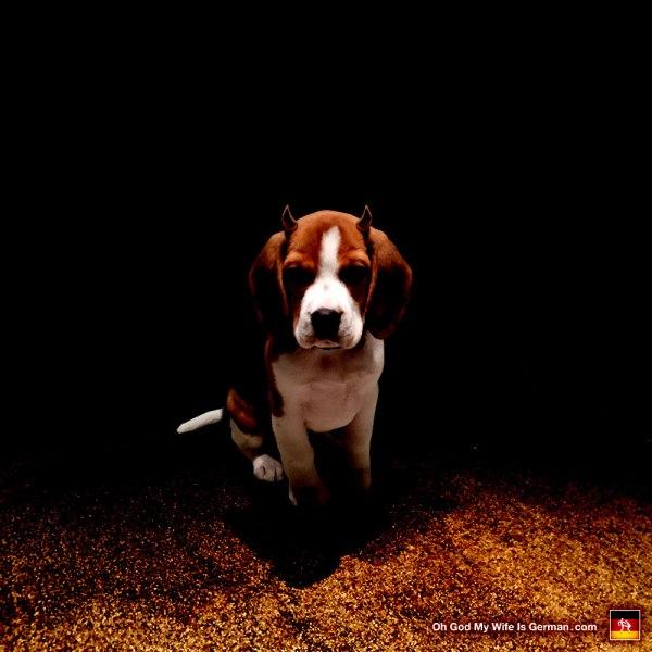 Evil Devil Beagle Puppy