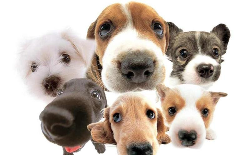 funny-cute-dog-faces-white-background-leinenzwang-germany-leash-law