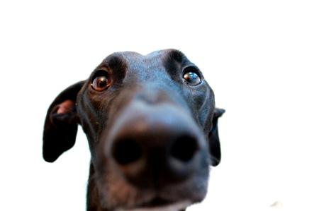 funny-dog-leash-law-germany